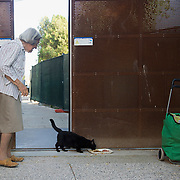 """VENICE, ITALY - AUGUST 27:  Irma a 91 years old venetian """"gattara"""" (cat carer) and a Dingo volunteer feeds a stray cat, she has been taking care daily of stray cats since more than 40 years on August 27, 2011 in Venice, Italy. Dingo is the Anglo-Venetian association part of the AISPA,  founded in 1965 by Helen Saunders and Elena Scapabolla and is devoted to the welfare of venetian stray cats. Cats in Venice"""