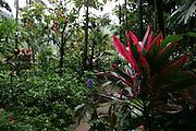 Lyon Arboretum, Oahu, Hawaii, USA<br />