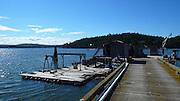 Oysters, Wescott Bay, San Juan Islands, Washington State