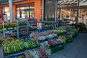 Flowers and plants for sale at an entrance to a supermarket in Bavaria, Germany