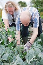 Man with learning disability and Attendant picking broccoli on allotment