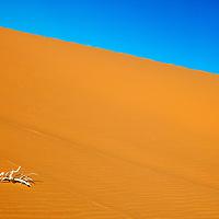 Pink Sand Dunes State Park - Utah