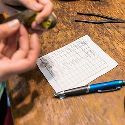A woman measures the wing of a recently captured Canada warbler at the Manomet Banding Lab in Manomet, Massachusetts.