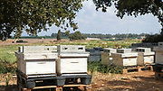 Bee hives & wildflowers in the field