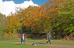©Licensed to London News Pictures 22/10/2020  <br /> Sevenoaks, UK.A couple walking their dog. The calm after storm Barbara today with bright autumnal colours at Toys Hill woodland in Sevenoaks, Kent.  Photo credit:Grant Falvey/LNP
