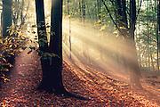 Morning sun shining through trees