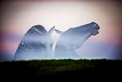 The Kelpies in this morning's mist. The Kelpies, the 30-metre high horse-head sculptures, which stand next to a new extension to the Forth and Clyde Canal, and near the River Carron, in The Helix, a new parkland project built to connect 16 communities in the Falkirk Council Area, Scotland. The sculptures were designed by sculptor Andy Scott and were completed in October 2013.