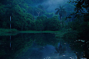 """""""Majestuosa primera luz, vigilante sereno de tierra embrujada"""".<br /> <br /> Virgin dawn / amanecer en Parque Nacional Camino de Cruces, Panamá / dawn in Camino de Cruces National Park, Panama.<br /> <br /> EDICIÓN LIMITADA / LIMITED EDITION (10)"""