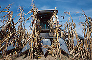 Combine Harvesting Corn in the Midwestern US