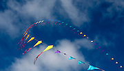 Kites in summer sky Images by Greg Beadle