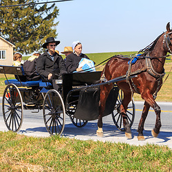 Intercourse, PA / USA - April 6, 2015: An Amish family travels in a horse drawn wagon along a roadway in Lancaster County.