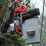 """11/9/10 -- WEST BATH, Maine. Asplundh Tree Crew Foreman Mike Lord cuts off a section of tree trunk which was hanging over the top of a power line on Tuesday afternoon on Butler Head in West Bath.  Tree and electrical crews from as far away as New York State spread across the Mid-Coast Region on Monday and Tuesday, cleaning up storm damage. Power was restored to nearly all customers by the end of the day, Tuesday.  Lord said, """"Our whole goal is to get these trees down without damage to the wires -- or the homeowners property."""" A fellow Asplundh foreman, Mike Morris said, """"There were over 100 broken poles in this area -- that's what takes a long time [to repair].""""   Roger S. Duncan / For The Forecaster."""