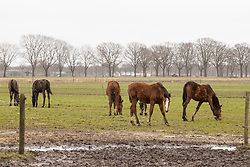 Jaarlingen<br /> Stal Knijnenburg - Deurne 2021<br /> © Hippo Foto - Dirk Caremans<br /> 21/03/2021