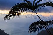 Silhouette of an endemic amau fern (Sadleria sp.) along the Pihea Trail, Kokee State Park, Kauai, Hawaii.