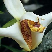 Exotic flora in the botanical gardens of Puyo, Ecuador.