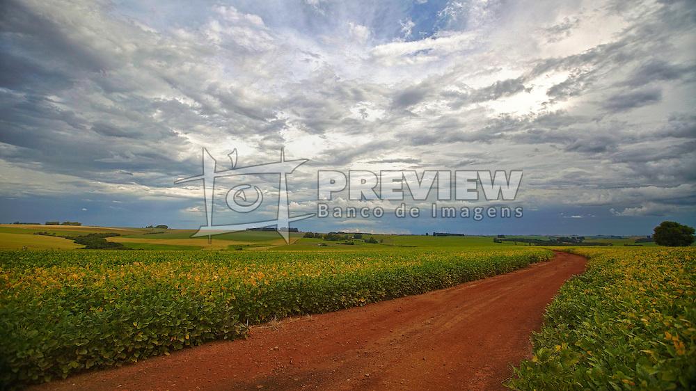 Lavoura de soja no município de São Borja, no Rio Grande do Sul. FOTO: Jefferson Bernardes/Preview.com