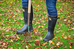 Aerating a lawn in autumn with a fork