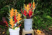 Flowers, Nahiku, Hana Coast, Maui, Hawaii