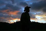 Farmer Joel Salatin is silhouetted in the morning light while tending to his chickens at the Polyface Farm  in Staunton, Va. ...Photo by Andrew B. Shurtleff,