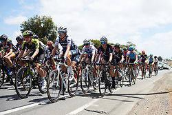 Tayler Wiles (USA) in the bunch at Deakin University Elite Women Cadel Evans Road Race 2019, a 113 km road race starting and finishing in Geelong, Australia on January 26, 2019. Photo by Sean Robinson/velofocus.com