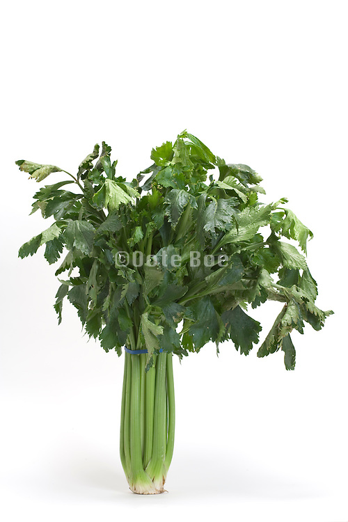 a bundle of fresh celery