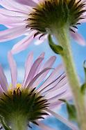 Botanical Studies and Macro Worlds