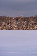 Sunset shines over edge of forest with snow covered trees and white snowy fields with few tracks over them, Kemeri National Park (Ķemeru Nacionālais parks), Latvia Ⓒ Davis Ulands | davisulands.com