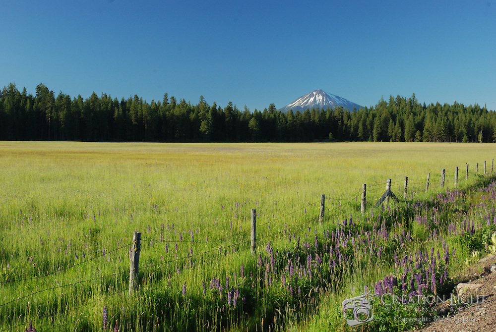 A mountain meadow in the Cascade Mountain near Howard Prairie Lake has a great view of Mount McLoughlin.  Purple lupine flowers grow in the foreground. ..Mount McLoughlin is a volcano in the Cascade Range of southern Oregon that is within the Sky Lakes Wilderness area. The mountain reaches 9,495 feet and is north of Mount Shasta in California, west of Upper Klamath Lake, and south of Crater Lake. On a clear day, the Sky Lakes Wilderness area, Crater Lake, Rogue Valley, and Mount Shasta are visible from the summit, which is accessible by a strenuous 5 mile hike (one-way).