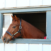Funny Cide reception at the KHP Hall of Champions