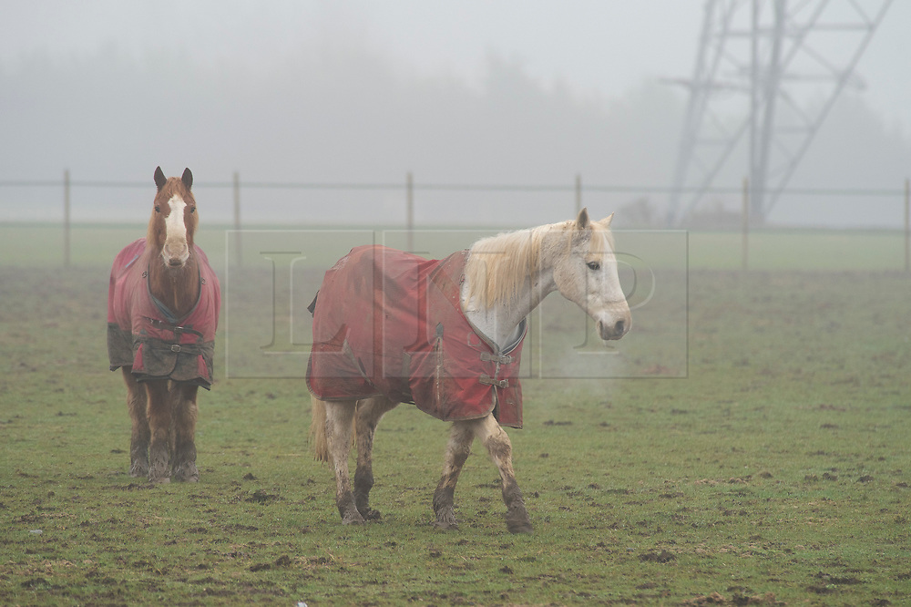 ©Licensed to London News Pictures 22/01/2020<br /> Swanley, UK. Horses grazing in a cold muddy field in Swanley, Kent wearing their winter coats. Freezing foggy weather conditions across the South East this morning as the cold weather continues. Photo credit: Grant Falvey/LNP