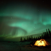 The Aurora Borealis glows over spruce trees and a candle-lit tent. Great Slave Lake, Northwest Territories, Canada.