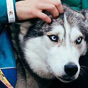 Jason Spooner performs to a packed crowd in Jackson, Wyoming. Petting the blue-eyed malamute in the crowd during performance.