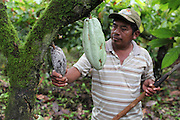 """Justino Peck, 49, Mopan Mayan cacao grower from San Jose, Toledo, analyses a cacao pod infected with Monilia. The fungal infection has caused severe damages to the TCGA's 2013 projected harvest as roughly 30 percent of cacao crops have been ruined by the so-called """"brown rot"""". The spread of Monilia has been attributed to an unusually wet summer season thought to be caused by global climate change. Toledo Cacao Growers' Association (TCGA), San Jose, Toledo, Belize. January 25, 2013."""