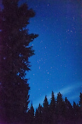 Night sky in winter with constellations and trees