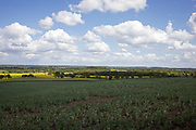 Oil Seed Rape fields in the British countryside near Studley, Warwickshire, England, United Kingdom.