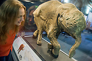 Victoria Herridge, an NHM expert looks at Lyuba. Mammoths: Ice Age Giants at the Natural History Museum (opens 23 May 2014)<br /> It includes huge fossils and life-size models of mammoths and their relatives tower above you and meet Lyuba, the world's most complete mammoth, as she takes centre stage in the exhibition for her first appearance in western Europe. She is the star of the show, a baby woolly mammoth discovered in Russia's Yamal Peninsula of Siberia in May 2007. She died around 42,000 years ago at just one month old. Her body was buried in wet clay and mud which then froze, preserving it until she was found by reindeer herder Yuri Khudi and his sons, as they were searching for wood along the frozen Yuribei River thousands of years later. The exhibition also includes some of the best-known species, from the infamous woolly mammoth and the spiral-tusked Columbian mammoth to their island-dwelling relative the dwarf mammoth. South Kensington, London.