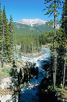 Athabasca Falls   Photo: Peter Llewellyn