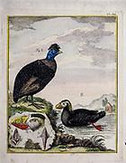 A zoology study of animals 'Dierkundige beschouwingen, eeniger soorten van zeldzame dieren, door naauwkeurige beschryvingen, afbeeldingen en verhandelingen opgeheldert' by Pallas, Peter Simon, Printed in Rotterdam in 1770