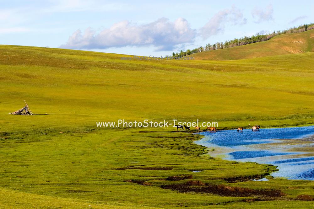 Horses in the open plains near Shiveet Manhan