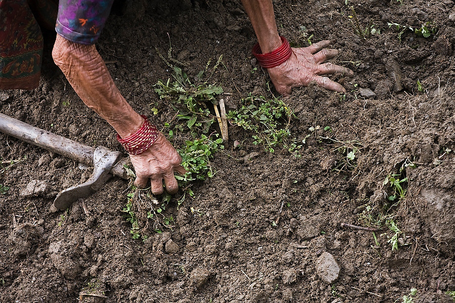 An elderly Nepali woman pulls weeds from bare dirt with her bare hands in her field outside the traditional Gurung village of Landruk along the Annapurna Sanctuary Trek, Himalaya Mountains, Nepal.
