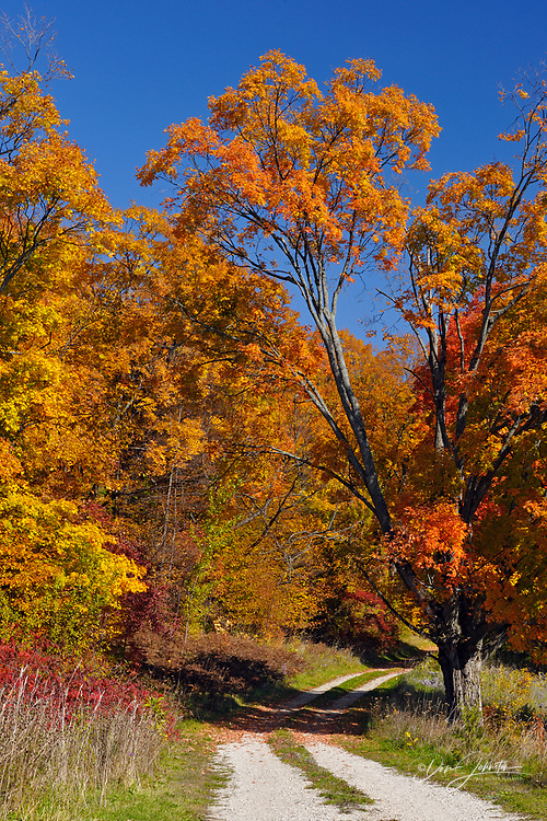 Maple trees and dirt road driveway, Manitoulin Is. Townline Rd., Ontario, Canada