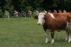 Peloton after start in Sentjernej of the 4th stage of Tour de Slovenie 2009 from Sentjernej to Novo mesto, 153 km, on June 21 2009, Slovenia. (Photo by Vid Ponikvar / Sportida)