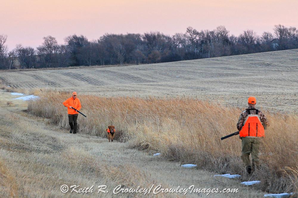 Pheasants Hunters Walk a Ditch in Eastern South Dakota