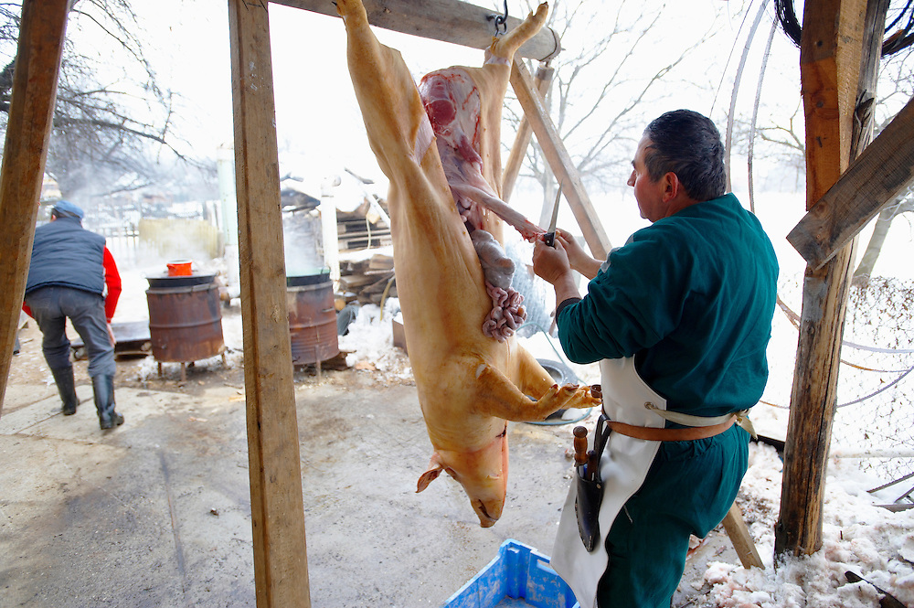 Traditional pig killing day - Valem Hungary .<br /> <br /> Visit our HUNGARY HISTORIC PLACES PHOTO COLLECTIONS for more photos to download or buy as wall art prints https://funkystock.photoshelter.com/gallery-collection/Pictures-Images-of-Hungary-Photos-of-Hungarian-Historic-Landmark-Sites/C0000Te8AnPgxjRg