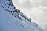 Snow-covered hillside in winter. Dramatic clouds and light, birds flying. South Iceland.