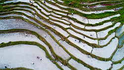 May 2, 2019 - Longsheng, China - Farmers working in the Longji terraced fields in Longsheng County, south China's Guangxi Zhuang Autonomous Region. The day marks the start of spring plowing for the locals. (Credit Image: © Xinhua via ZUMA Wire)