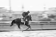November 1-3, 2018: Breeders' Cup Horse Racing World Championships. Seven Trumpets