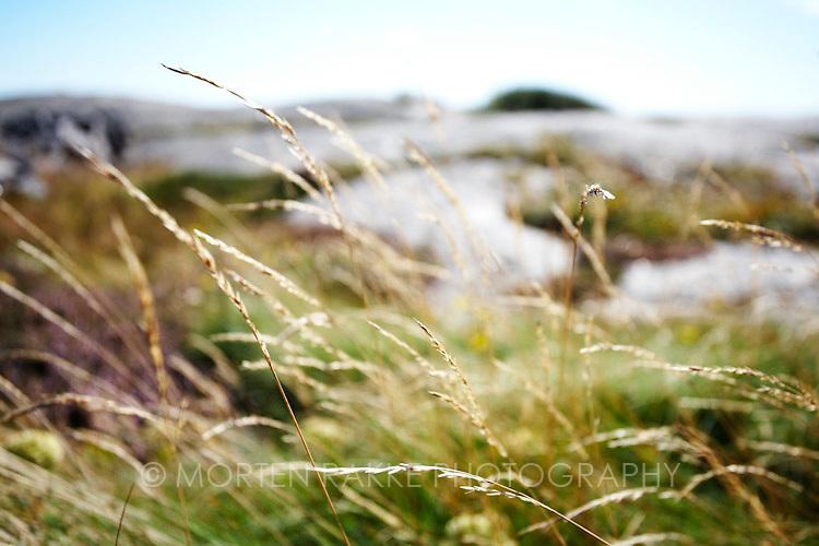 Stalks of grass, close-up