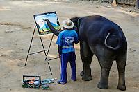Thailande, Chiang Mai, Mae Sa, spectacle d elephant pour touristes // Thailand, Chiang Mai, Mae Sa, elephant show for tourist