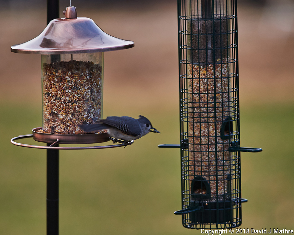 Tufted Titmouse. Image taken with a Nikon Df camera and 300 mm f/4 telephoto lens (ISO 280, 300 mm, f/4, 1/320 sec)
